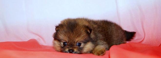 Продажа Собаки и щенки